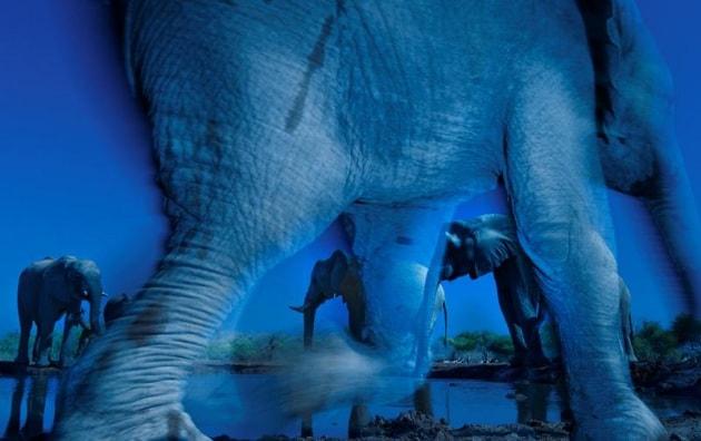 Wildlife Photographer of the Year 2013, la natura si fa bella