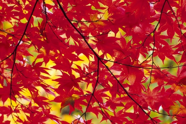 Perché le foglie in autunno diventano gialle, arancioni, rosse e marroni Focus it
