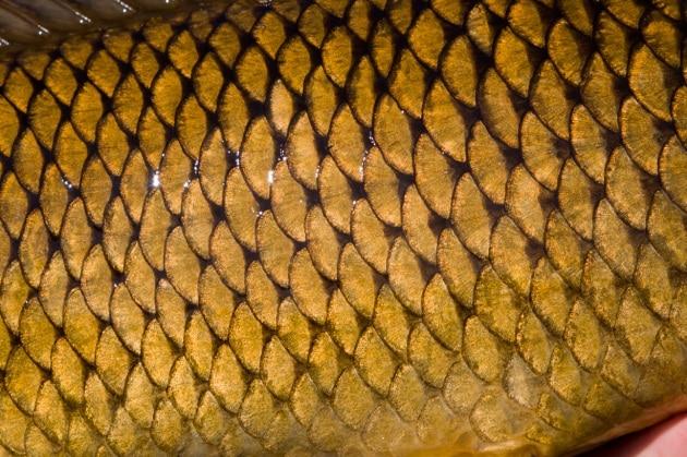 L'armatura ispirata alle scaglie di pesce