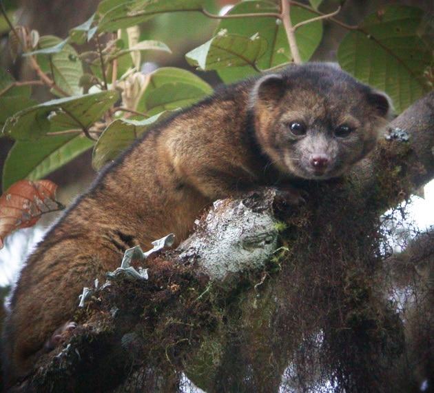 Le dieci specie più interessanti del 2013