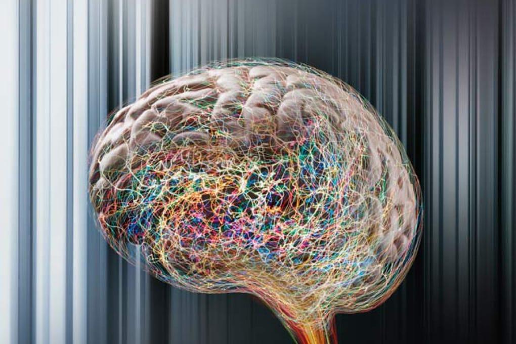 Il cervello non invecchia se impara cose nuove