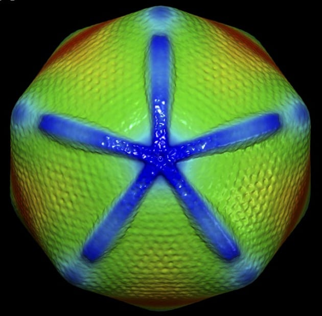 Mimivirus: il gigante dei virus
