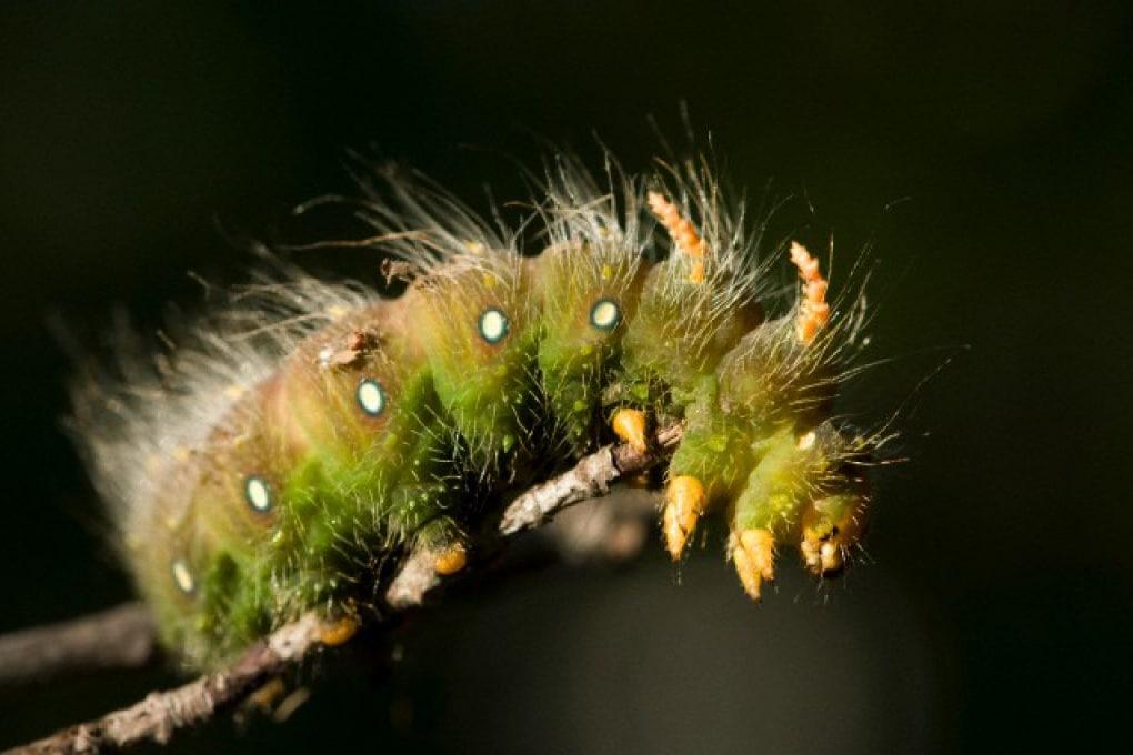 A cosa servono i peli degli insetti?