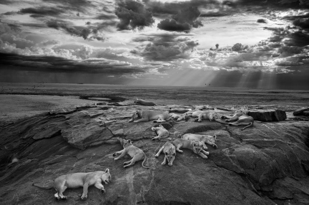 I vincitori del Wildlife Photographer of the year 2014