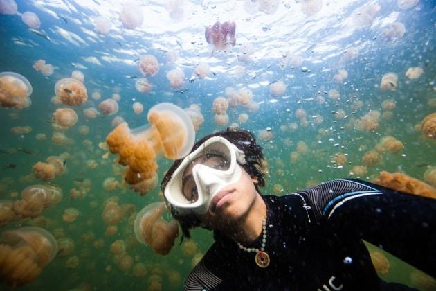 Un lago di meduse