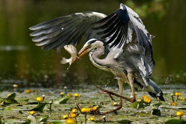 Ornitologia per immagini