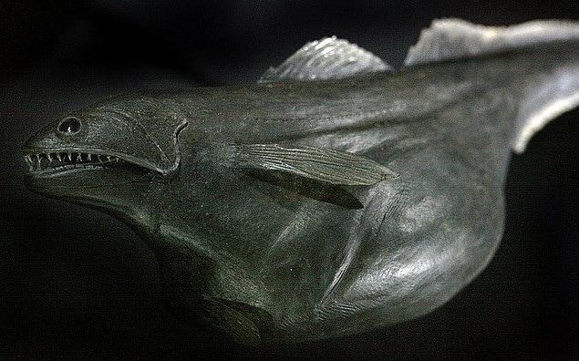 blackswallower
