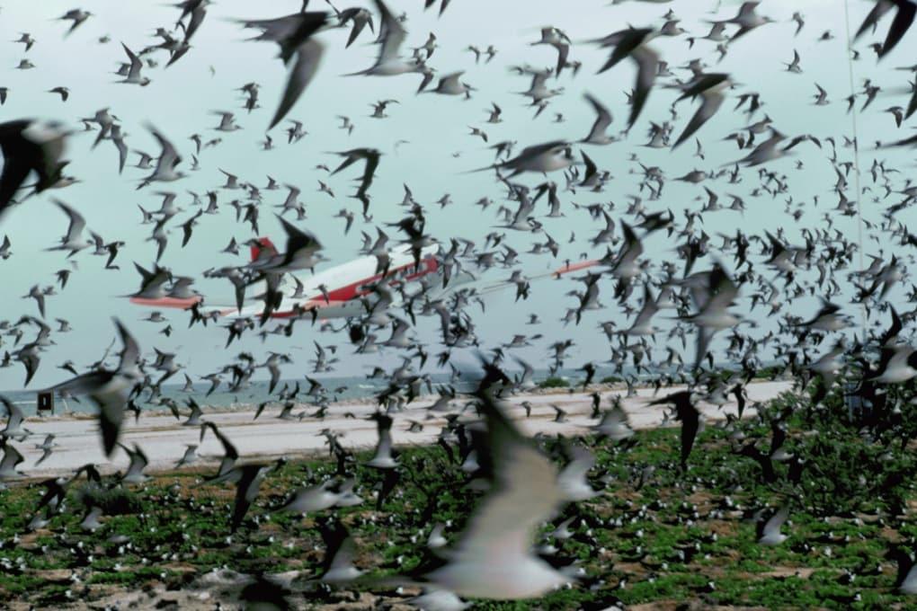 Luci blu per salvare gli uccelli dagli aerei