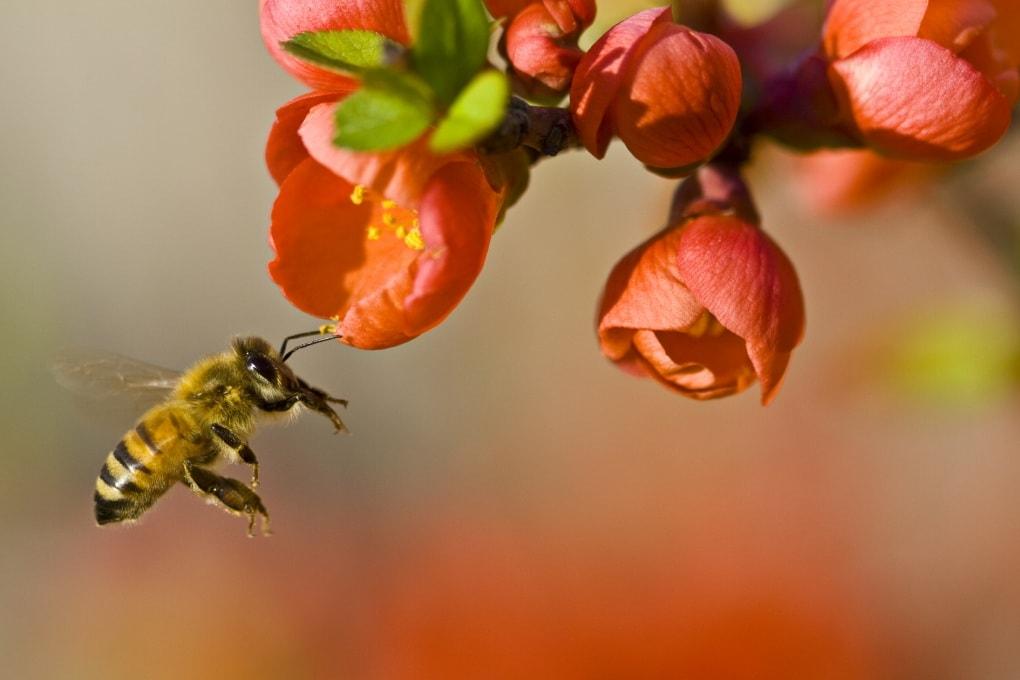 Le api sono contaminate da pesticidi che non arrivano solo dall'agricoltura