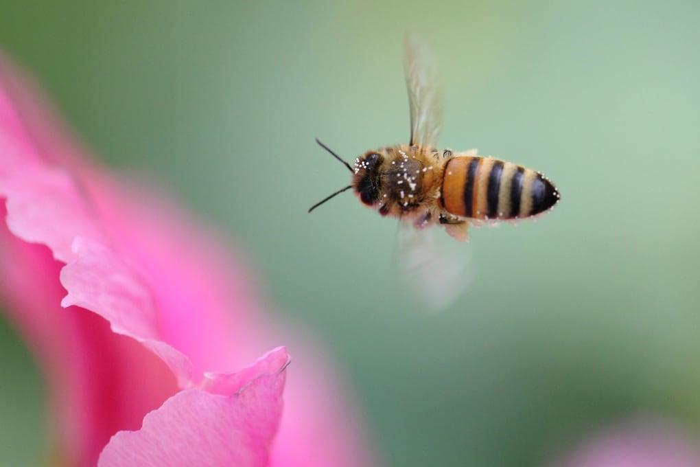 Trovato un altro pesticida nemico delle api