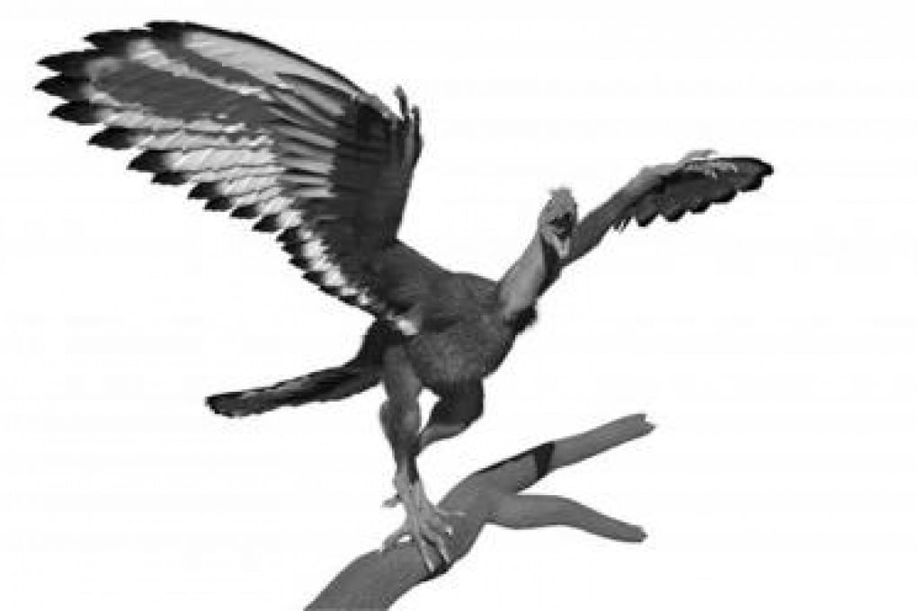 Ricostruito il piumaggio del dinosauro-uccello