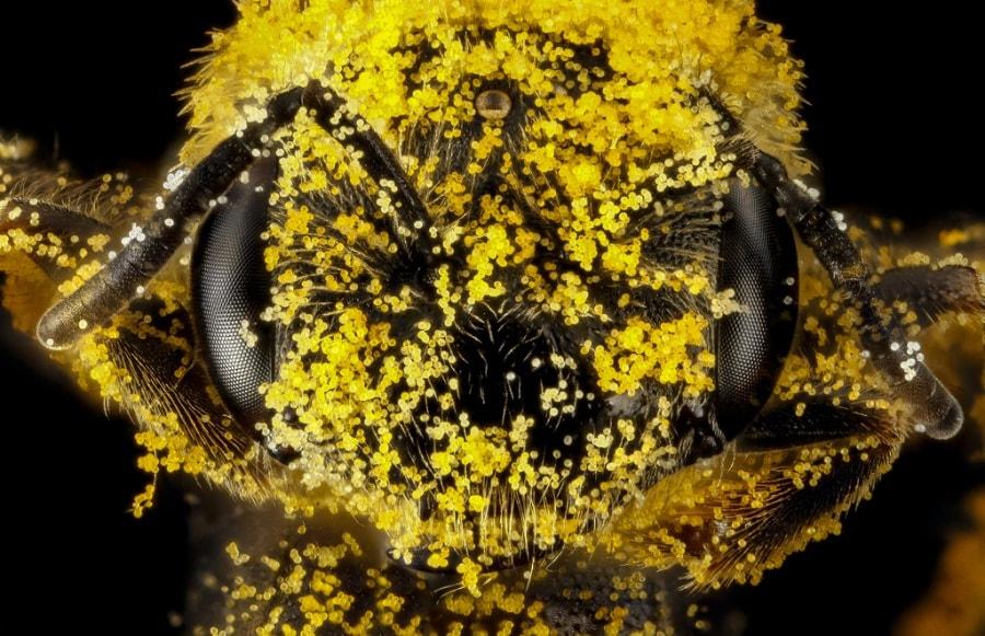 Faccia a faccia con le api
