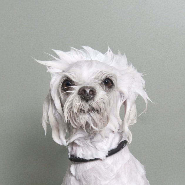 Mai visto un cane che fa il bagno?
