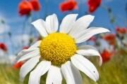 equinozio-primavera