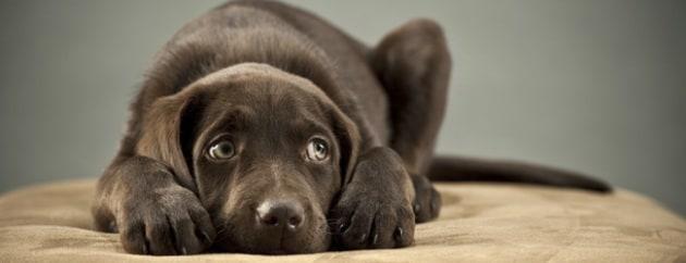 La guida per limitare i danni dei botti di Capodanno sugli animali domestici