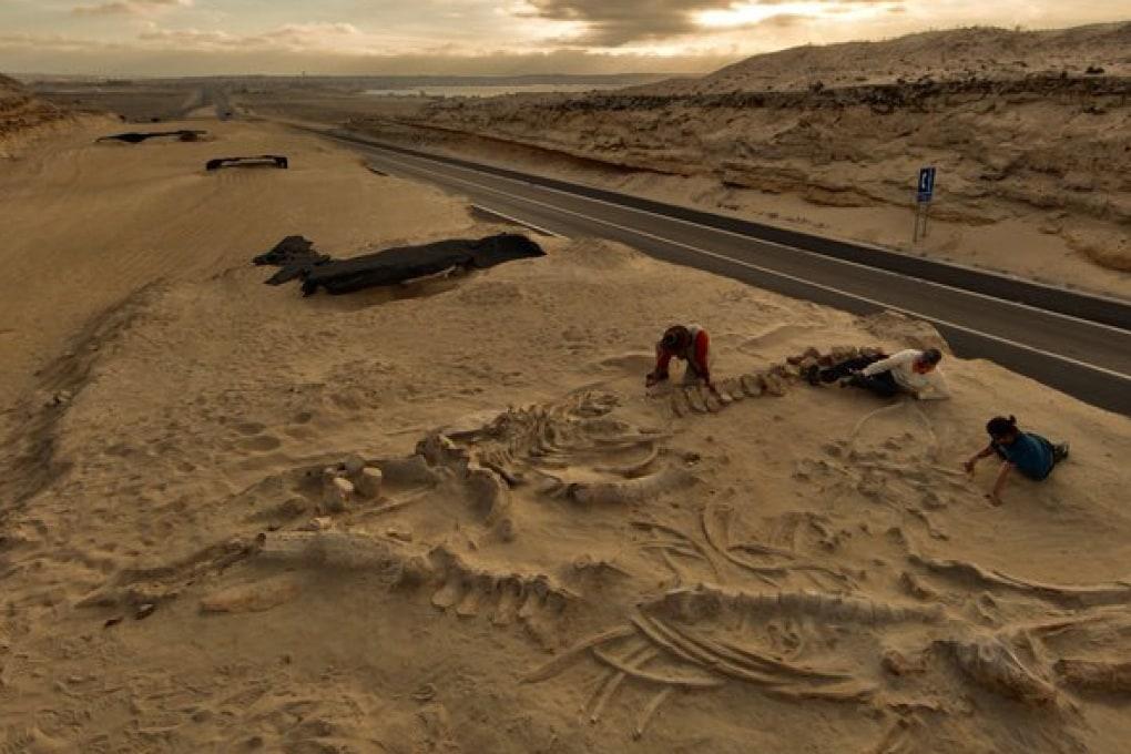 Spiegato il mistero del cimitero delle balene - Focus.it