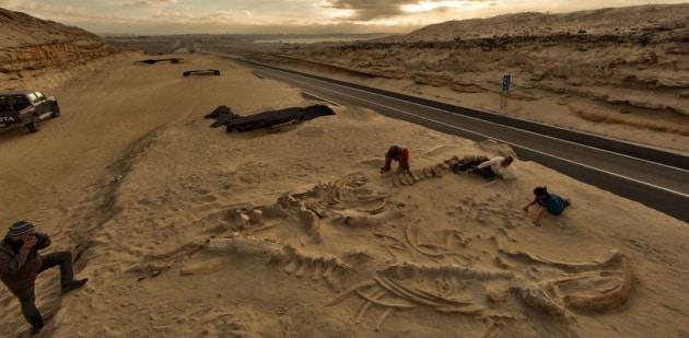 Spiegato il mistero del cimitero delle balene
