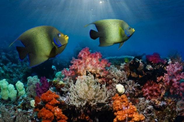 Le stagioni si avvertono anche in fondo al mare?