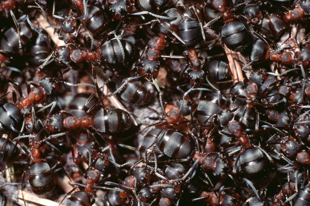 Estinto l'uomo, resterà solo una formica?