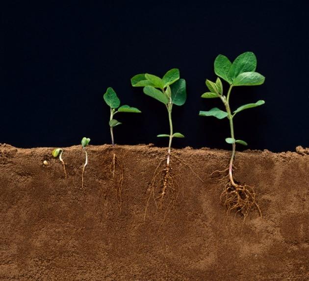 Crescere o difendersi: questo è il problema