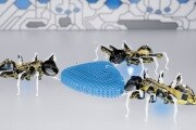 formiche-robot