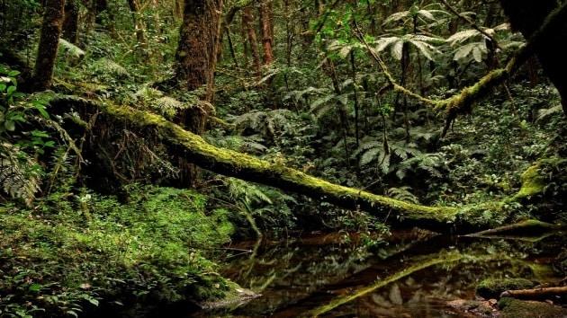 Il Museo di Trento scopre nuove specie in Africa