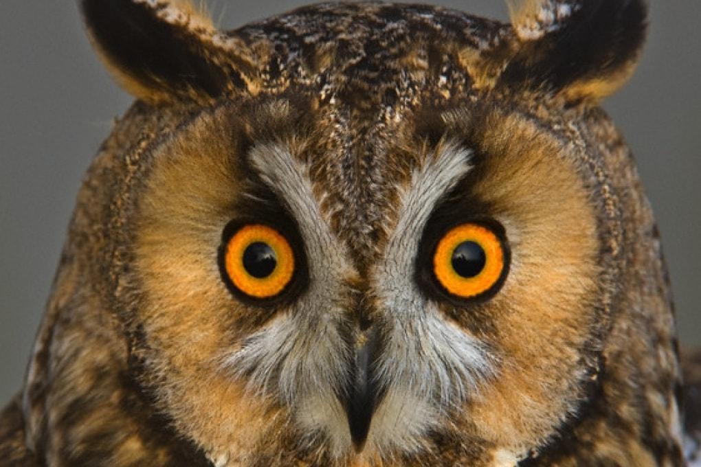 Come vedono gli uccelli