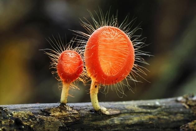 Funghi, belli (e buoni) da morire