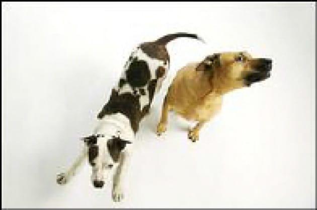 Ecco il genoma del cane