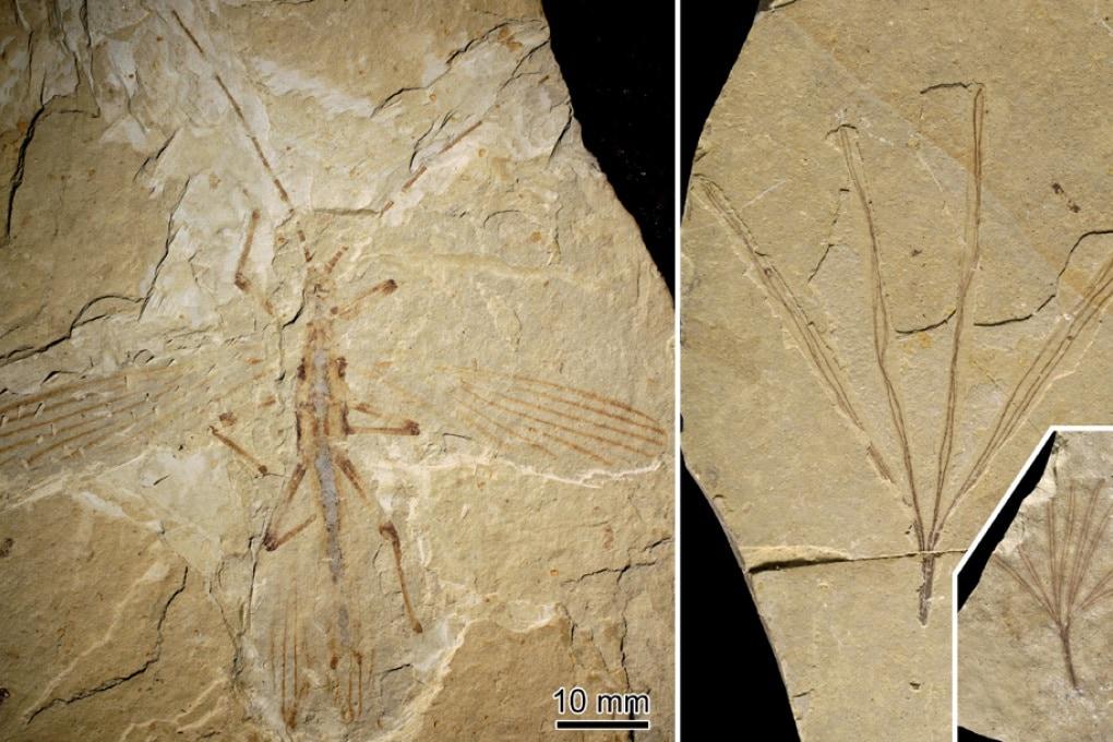 L'insetto stecco del Cretaceo che camminava accanto ai dinosauri
