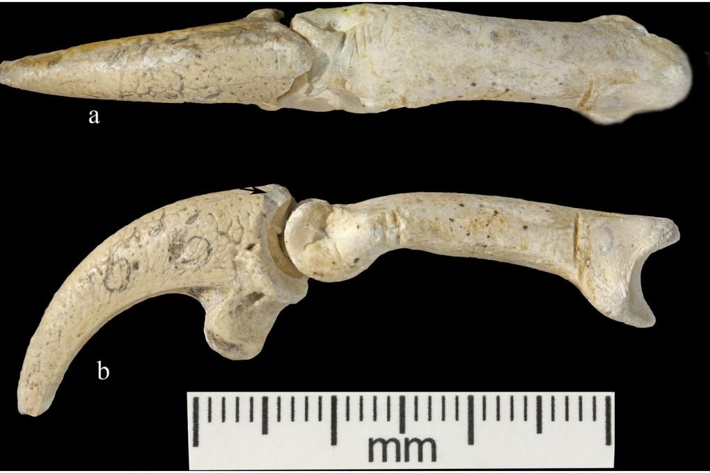 Gioielli da artigli d'aquila in un sito Neanderthal