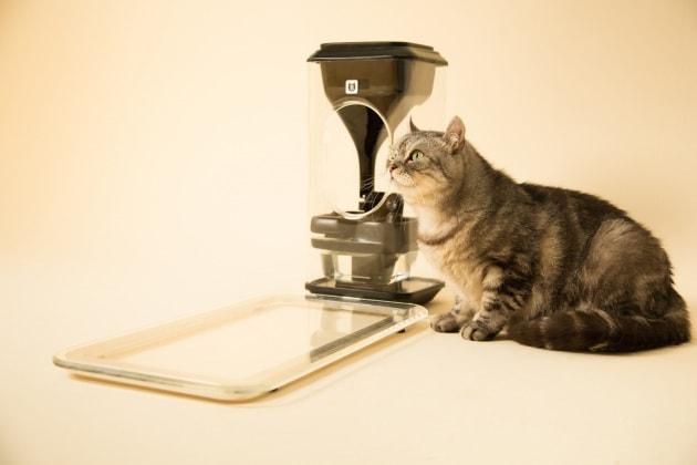 L'hi-tech contro i gatti obesi