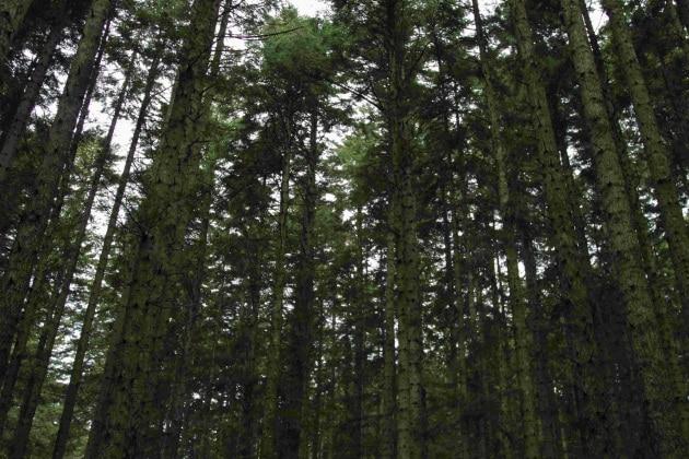 Il prezzo della natura: l'ambiente  in dollari