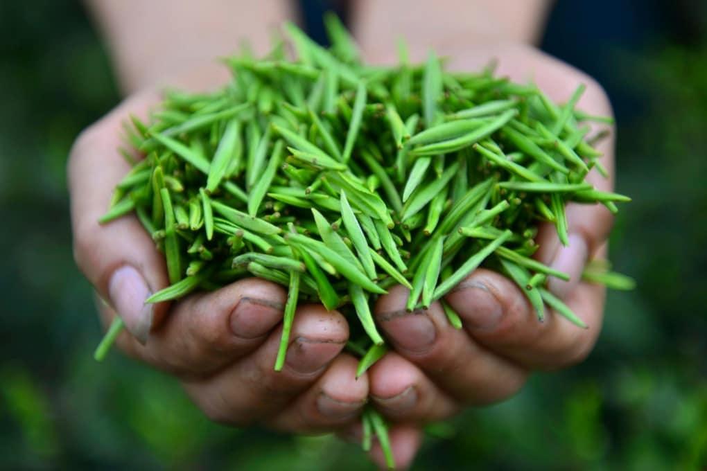 Quattro buoni motivi per bere il tè