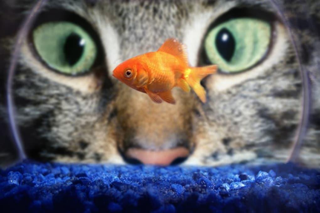 Cosa succede a un pesce nell'acqua frizzante?