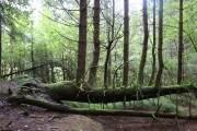 Vajont: quattro passi nel bosco alieno