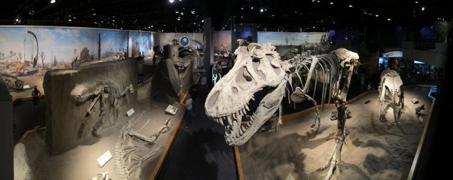 royal_tyrrell_museum_of_palaeontology