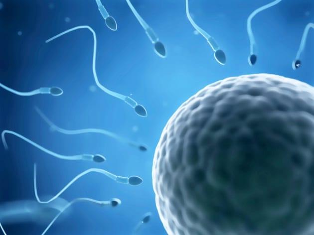 Il segreto della velocità degli spermatozoi