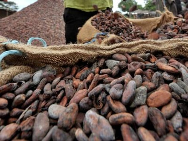 Dalla moringa al cacao, 50 cibi per uno stile di vita superfood
