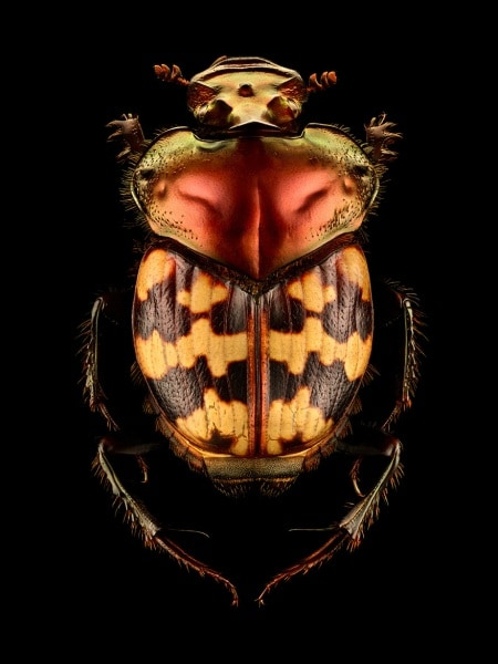 microsculpture-macro-photos-insects