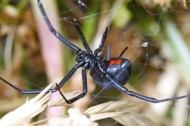 Il DNA nascosto nella tela dei ragni