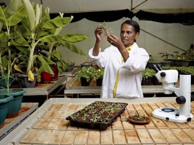 Biotecnologie in agricoltura