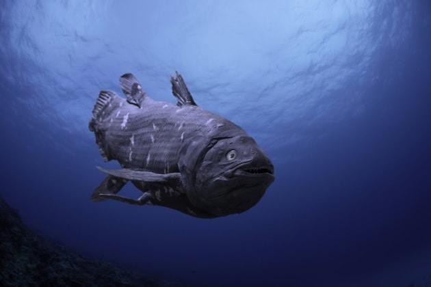 10 cose che credi di sapere sull'evoluzione
