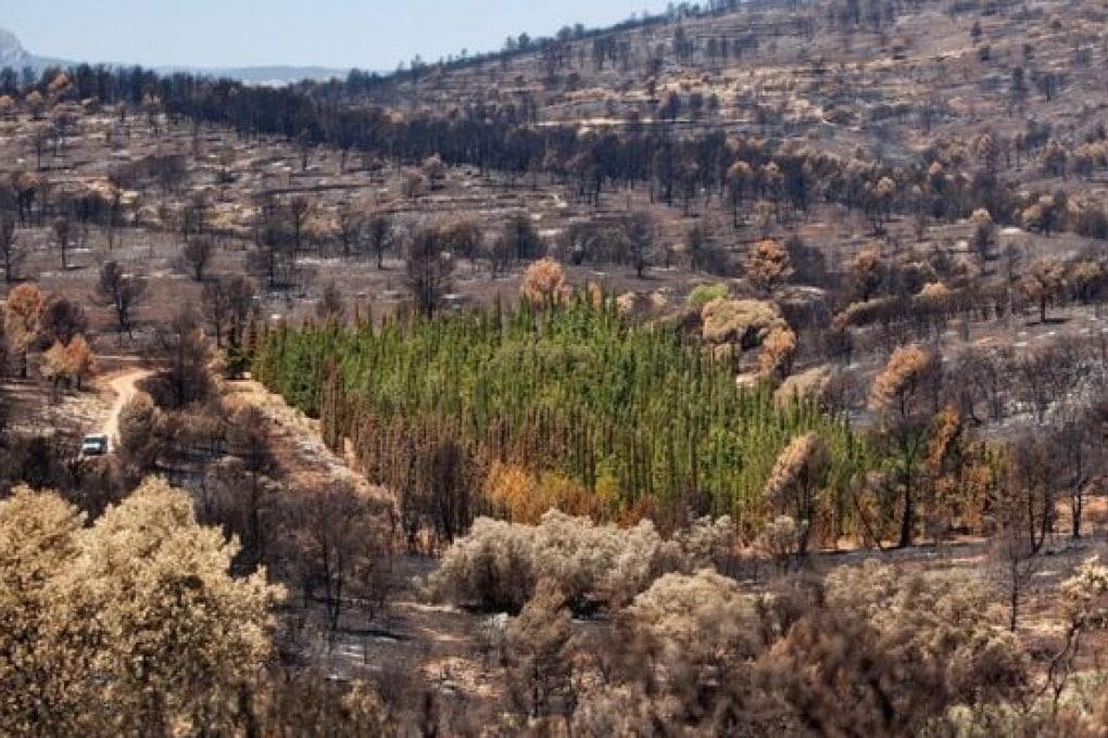 Ci sono piante che resistono agli incendi