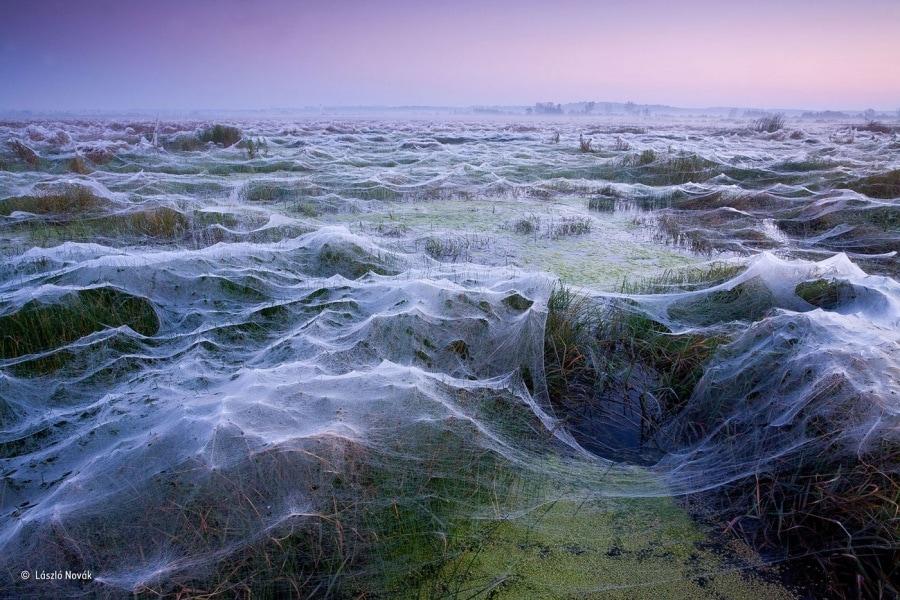 on_spiders_laszlo-novak