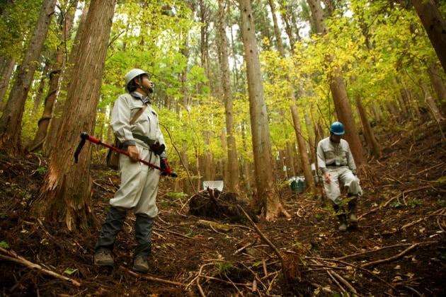 Fukushima, foreste contaminate