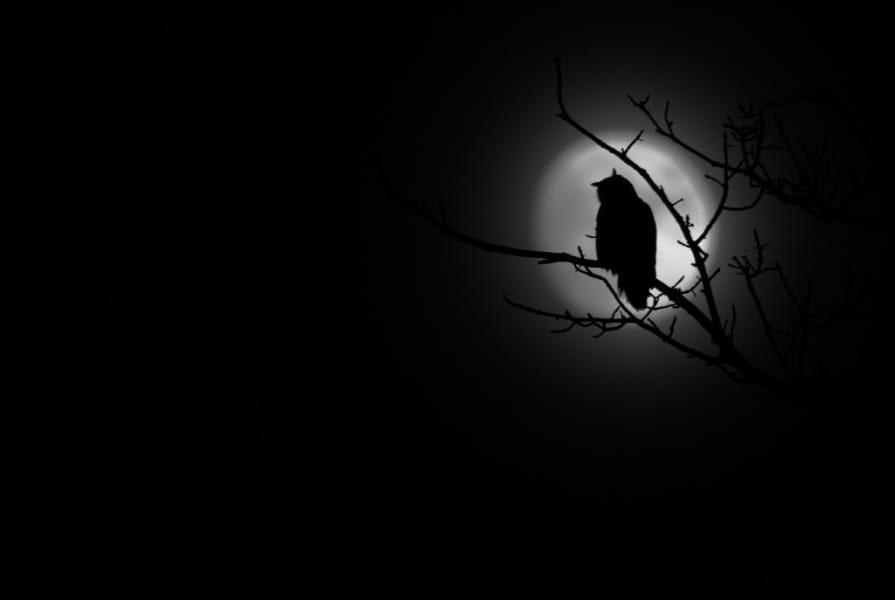k1_07_klaus_tamm-nachts_bei_vollmond