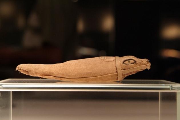 Un terzo delle mummie animali egizie sono vuote. Ma perché?