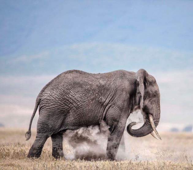 USA, cade il divieto di riportare in patria i trofei della caccia all'elefante