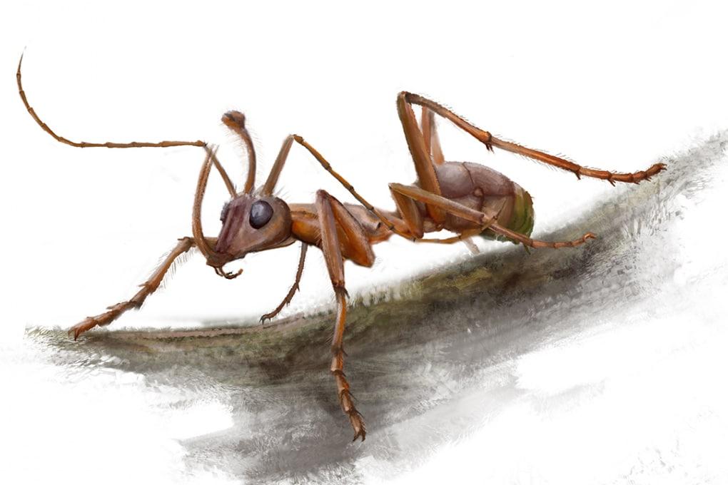 La formica-unicorno del Cretaceo